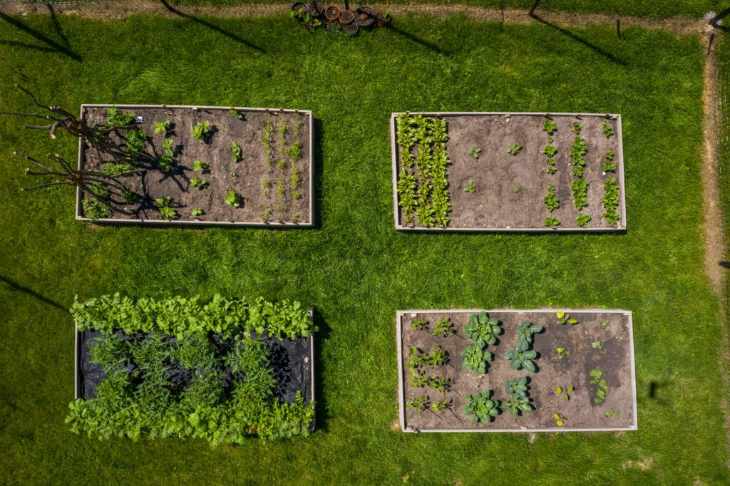 arial view of vegetable gardens